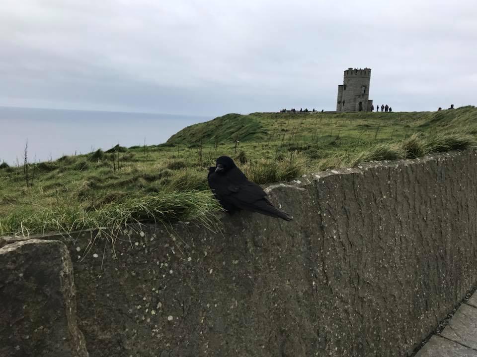 Bird Haven, Ireland