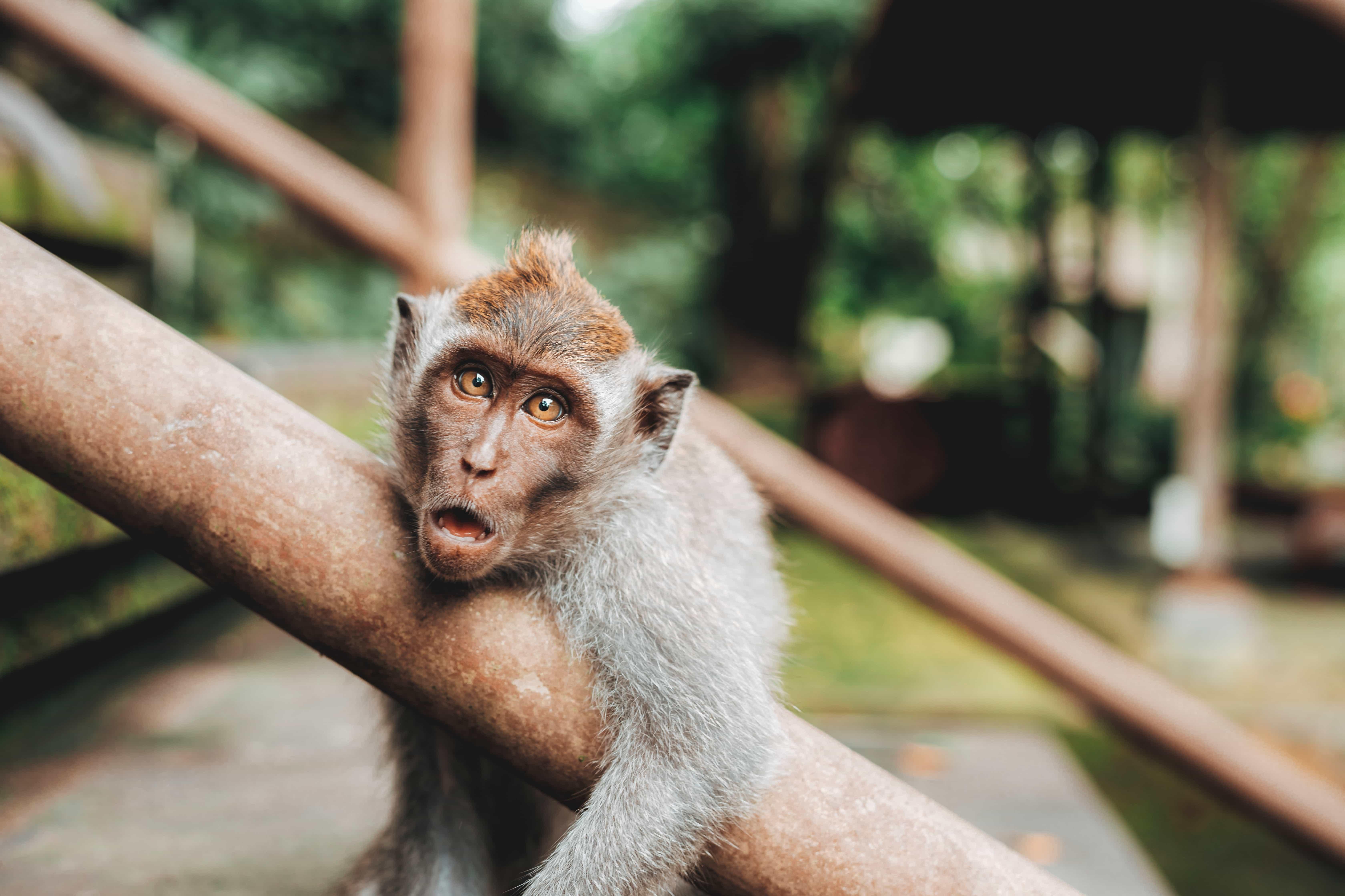 visiting Bali