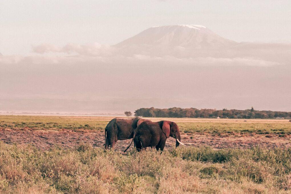 Best Safari Experiences in Africa