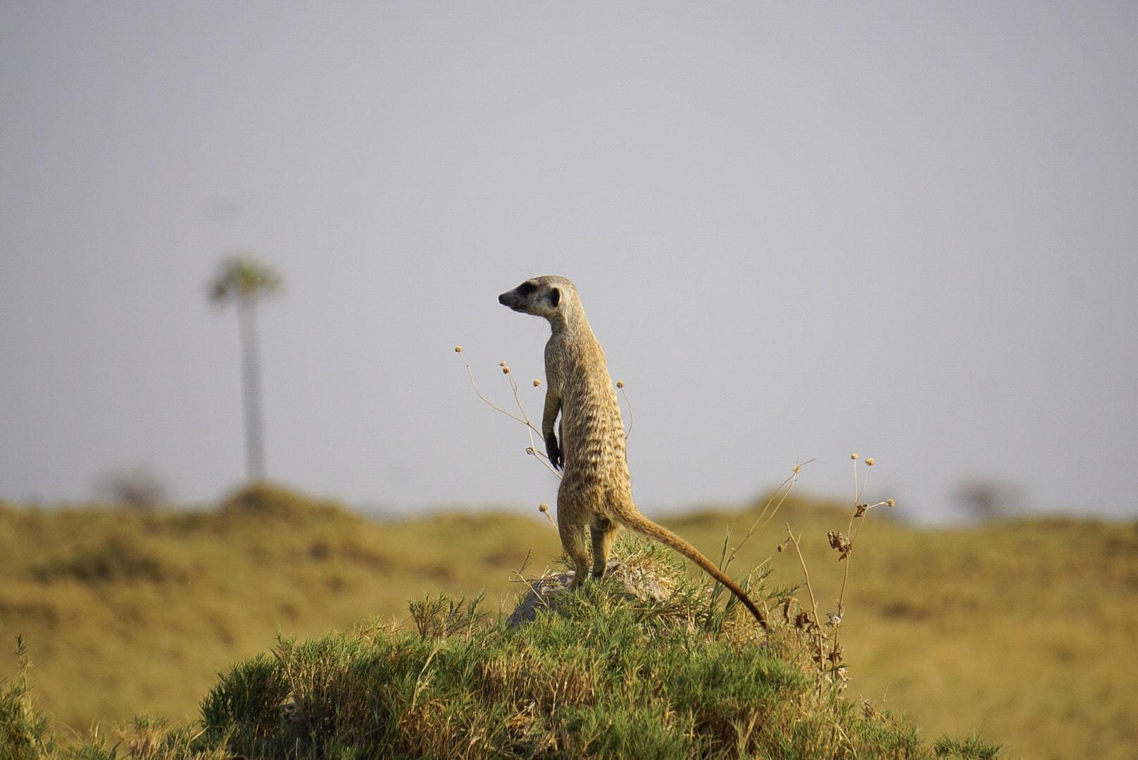 Best African Safari Experience