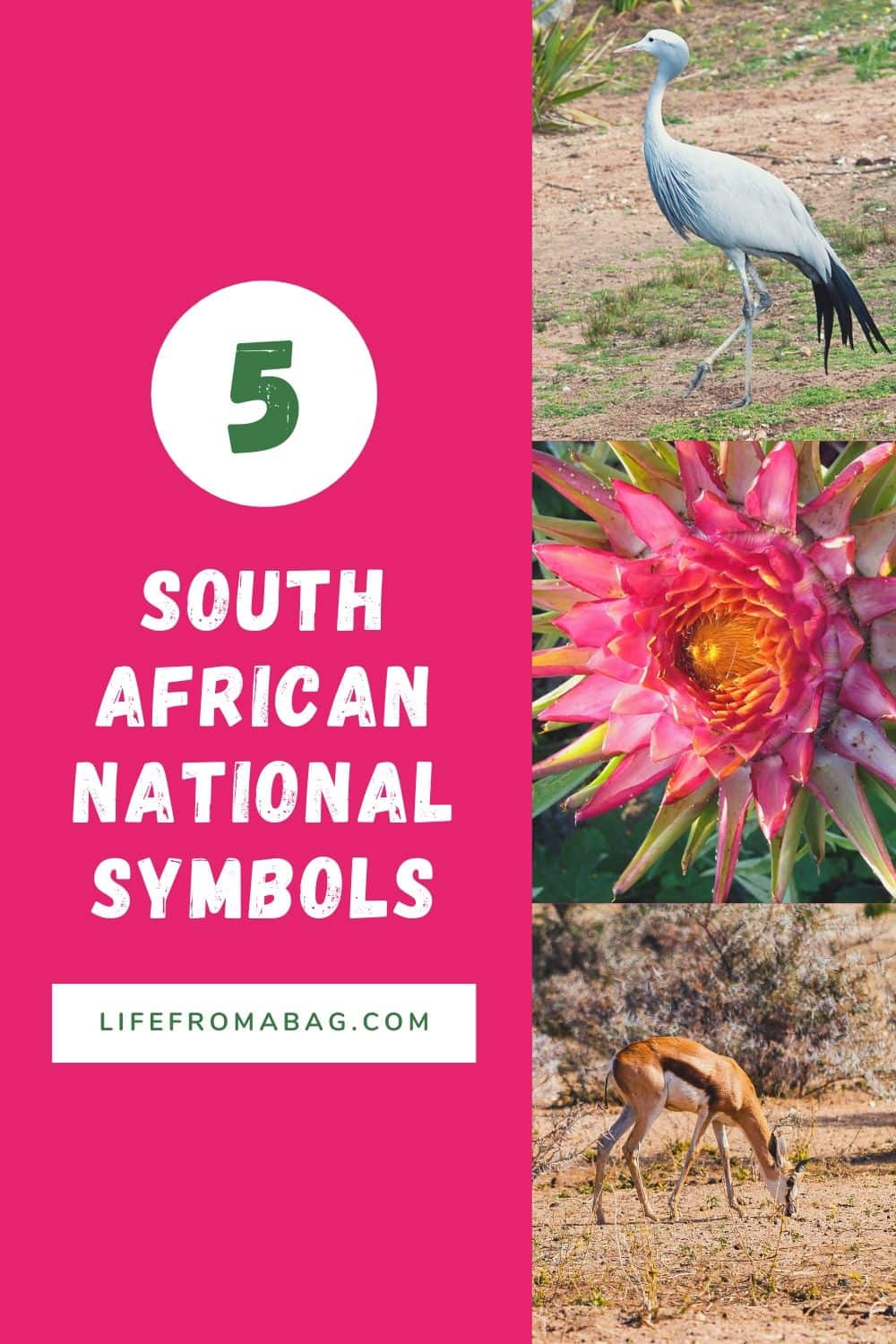 5 South African National Symbols