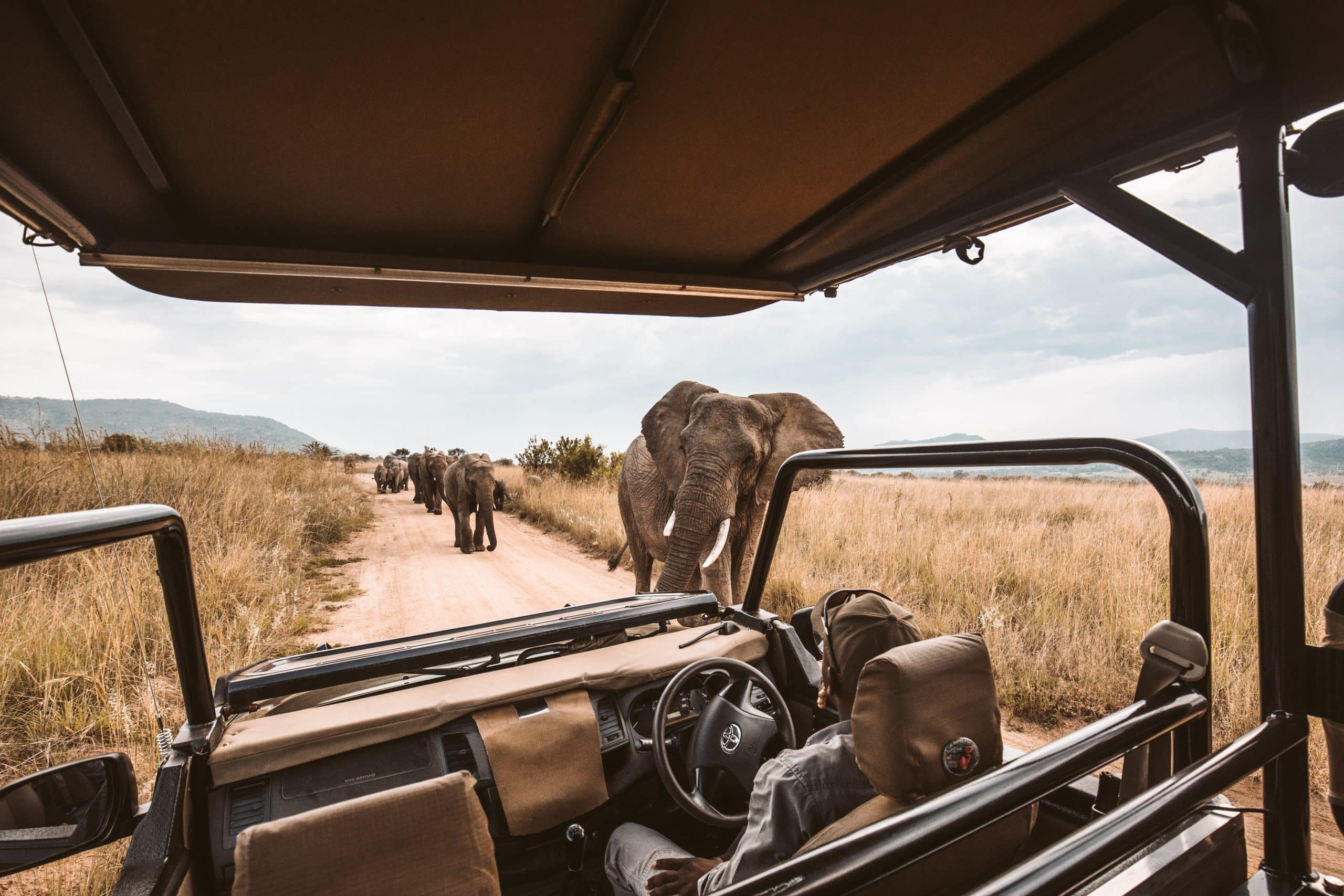 Best Game Reserves Near Cape Town